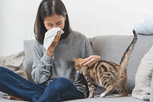 cat hair causing girl to sneeze
